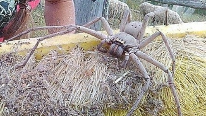 The real stories behind Earth's largest spiders
