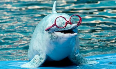 dolphins-really-smart-dolphin-facts