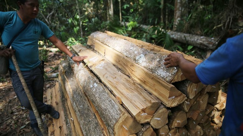 jungle logging operation