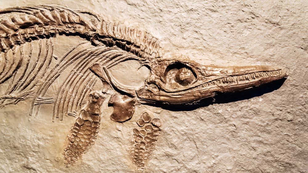 The Reptile Fossil Paleontologist Mary Anning Found